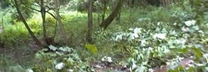pijpen in het bos zwanger prive ontvangst